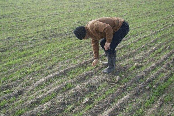 54 میلیارد تومان تسهیلات به طرح های کشاورزی پرداخت شد