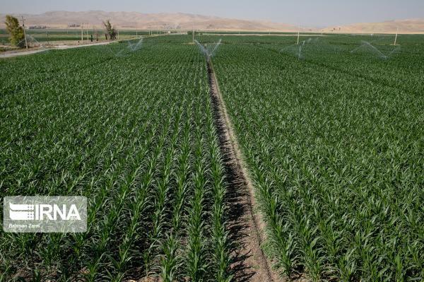 خبرنگاران حدود 10 هزارهکتار اراضی گیلان به سیستم آبیاری نوین تجهیز شد